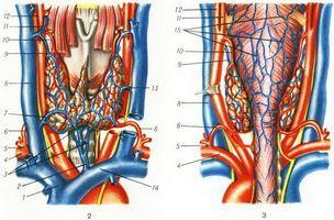 Простатит представляет собой воспалительный процесс