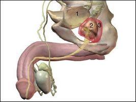 Каштан не только помогает против простатита, но и улучшает общее состояние человека
