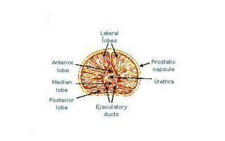 Без достаточного количества цинка в организме невозможно сохранить хорошее зрение