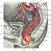 Главным условием, которое должен соблюдать больной, в процессе лечения простаты, является употребление большого количества цинка