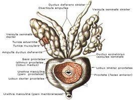 При появлении уже первых сигналов организма рекомендуется обращаться к врачу