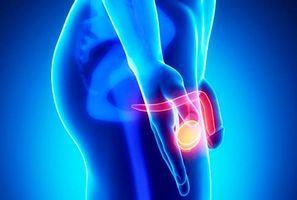 Простата – небольшое круглое образование в форме грецкого ореха