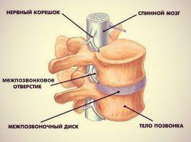Преимущества крема для спины и суставов