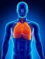 Сигаретный дым становится причиной разрушения эпителия