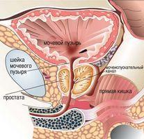 он способствует подвижности сперматозоидов