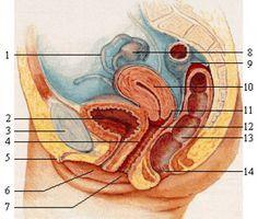 Воспаление железистых тканей простаты — заболевание, с которым сталкивается каждый третий мужчина