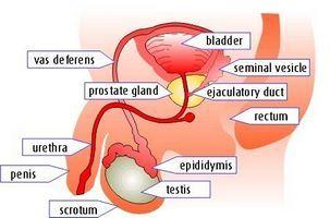 Если мочевой пузырь был ранее травмирован и требуется значительное время для восстановления