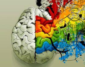 За что отвечает правое полушарие мозга